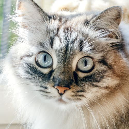 Common cat illnesses that can be contagious or serious, Rock-Hill vet