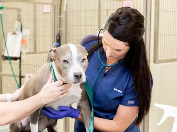 Specialists | Carolina Veterinary Specialists | Rock Hill Speciality & Emergency Vet